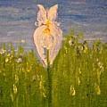 Iris by Evelina Popilian