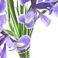 Iris In A Vase by Kathryn Goddard
