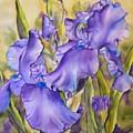 Iris In Purple by Diane Ziemski