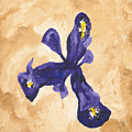 Iris Iv Pixie  by Bernadette Robertson