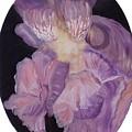 Iris Study by Mikki Alhart