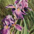 Iris Twins by Ann Sokolovich