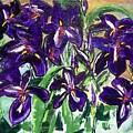 Iris by Valerie Wolf