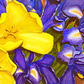 Iris Withtulip by Robert Thomaston