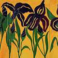 Irises by Portraits By NC