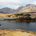 Island Of Trees In A Bare Connemara Landscape by Pierre Leclerc Photography