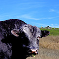 Its A Bulls Life by Wingsdomain Art and Photography
