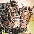 Jack And Joe Hard Workin Horses by Toni Grote