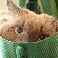 Jack In The Bag by Cindy Johnston