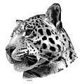 Jaguar by Scott Woyak