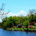 Japanese Gardens In Spring by Lisa Jayne Konopka