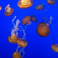 Jelly Fish 2 by Dawn Marie Black
