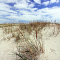 Jersey Dune I by Mary Haber