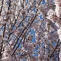 Joy Of Spring by Helene  Champaloux-Saraswati