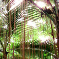 Jungle In There by Mark Holbrook