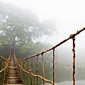 Jungle Journey by Skip Nall
