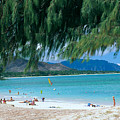 Kailua Beach Park by Peter French - Printscapes