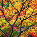 Kaleidoscope Of Autumn Color by Eggers Photography