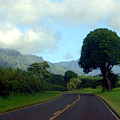 Kauai Road by Davida Parker