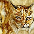Kentucky Wildcat by Travis Kelley
