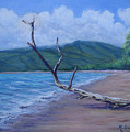 Kihei Beach Tree by Maxine Ouellet