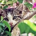 Kitten Hiding Out by Francesco Roncone