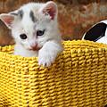 Kitten In Yellow Basket by Garry Gay