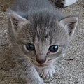 Kitten by J M Farris Photography
