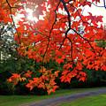 Knox Park 8444 by Guy Whiteley