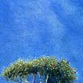 Kokee Trees by Kenneth Grzesik