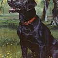 Labrador Retriever by Jean Hildebrant