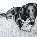 Labrador Samy by Nicole Zeug