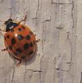 Lady Bug by Joe  Martin