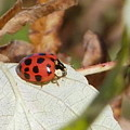 Lady Bug by Peggy King