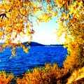 Lake Coeur D'alene Through Golden Leaves by Carol Groenen