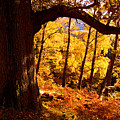 Lake District - Fall Colors Near Aira Force by Dave Lawrance