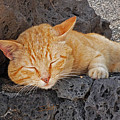 Lanzarote Ginger by Charles Stuart