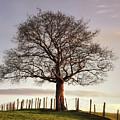 Large Tree by Jon Baxter