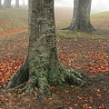 Last Leaves Of Autumn by Terry Perham