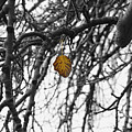 Last One To Fall by Layne Hardcastle
