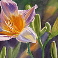 Lavender And Gold Lily by Sharon Freeman
