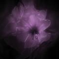 Le Purple Flower by Helyn Broadhurst Cornille
