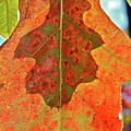 Leaf Behind by Diana Hatcher