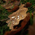 Leaf In Autumn. by Bernard Jaubert