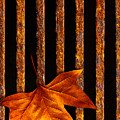 Leaf In Drain by Carlos Caetano