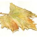 Leaf by Jose Carvalhosa