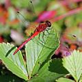 Leaf Runner by Paul Slebodnick