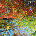 Leaves Of All Colors by Brittany Horton