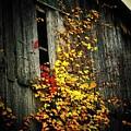 Leaves On An Old Barn by Joyce Kimble Smith
