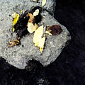 Leaves On The Rocks by Lyle Crump
